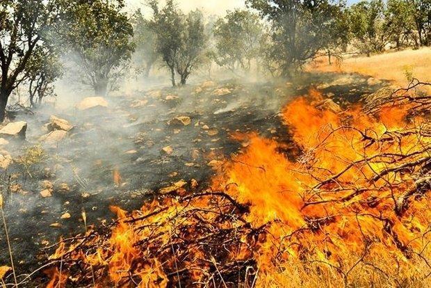 50 هکتار از اراضی مرتعی جنگل درازنو در آتش سوخت