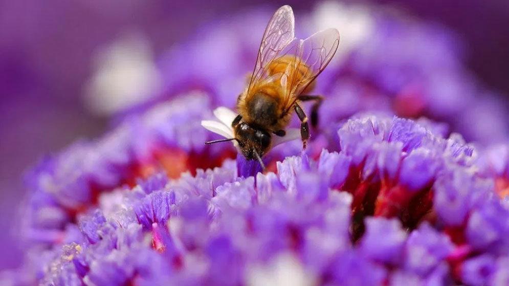 زنبورها ریاضی دانان خوبی هستند