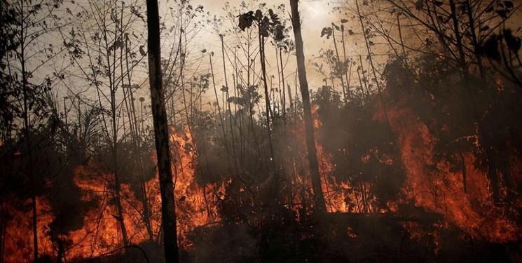 هشدار کارشناسان برای از بین رفتن 64 هکتار جنگل روی کره زمین