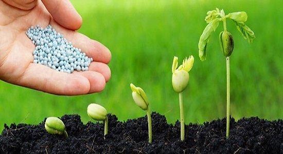 حقیقت گیاهان تراریخته