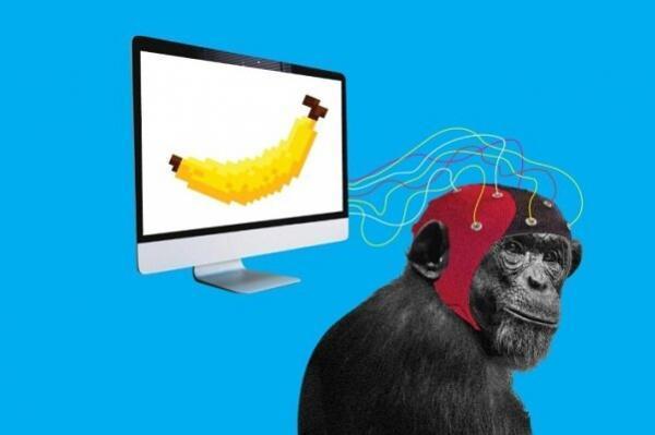 میمون ها اجرای بازی های ویدئویی را یاد گرفتند!