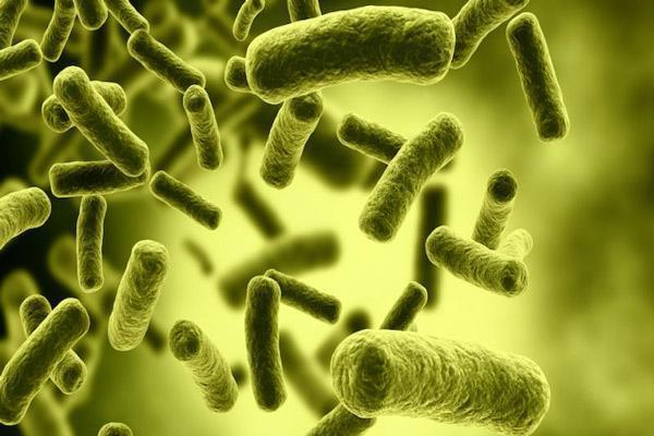 ماست پروبیوتیک چیست و چه خواصی دارد؟